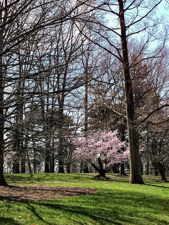 Msu Photograph - Spring Walk On Campus by Joseph Yarbrough