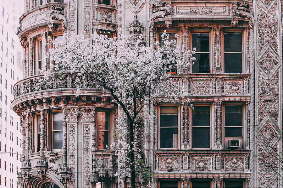 New York City Photograph - Spring West 58 And 7th by Vincent James