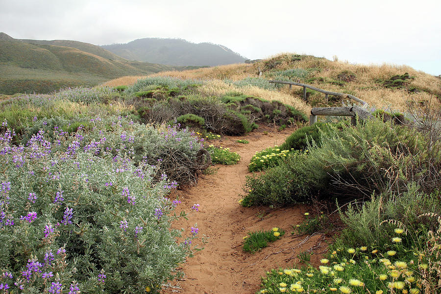 Montana De Oro Photograph - Spring Wild Flowers by Michael Rock
