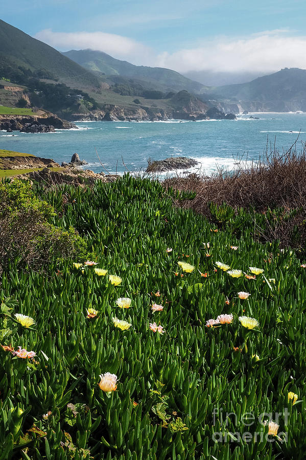 Spring Wildflowers at Big Sur, California #30339 by John Bald