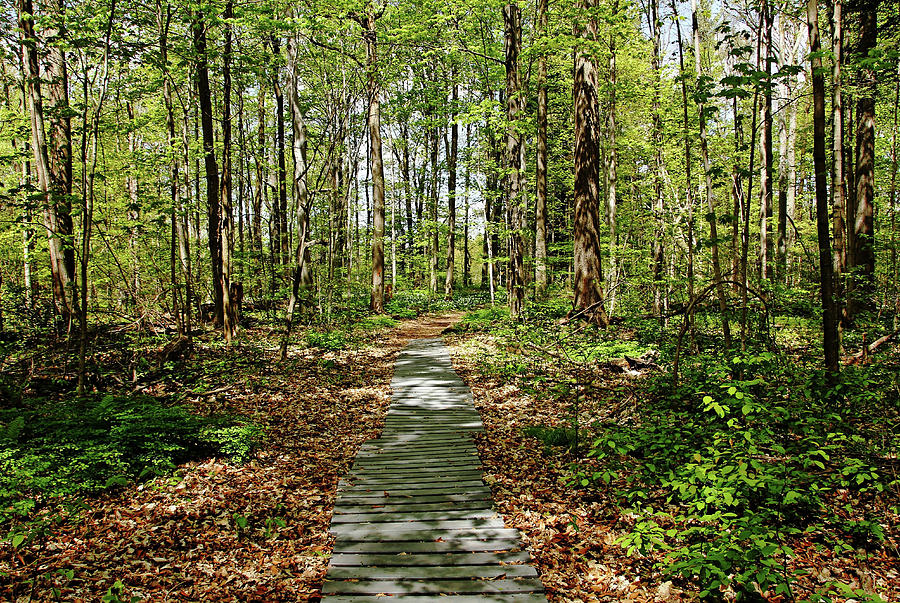 Spring Woods Photograph