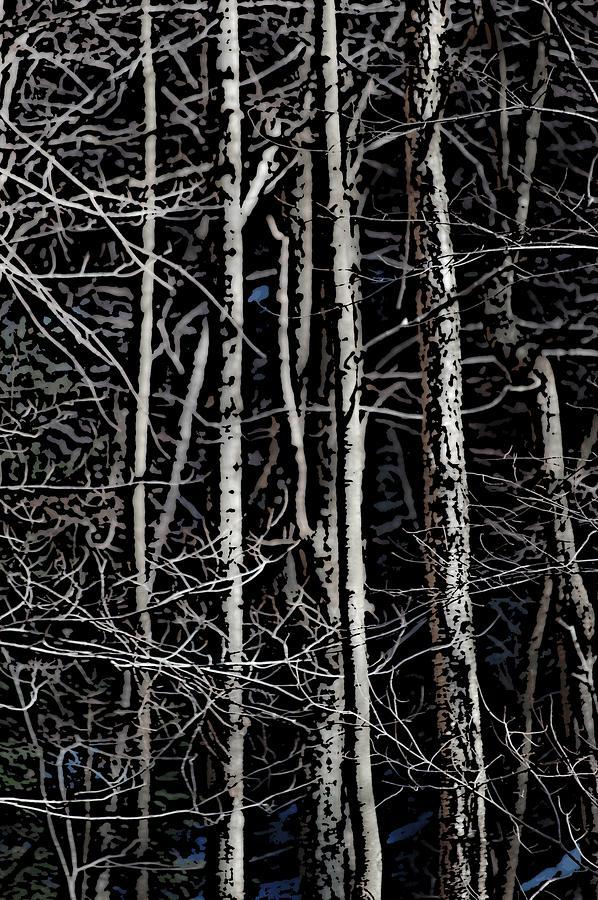 Digital Photography Digital Art - Spring Woods Simulated Woodcut by David Lane