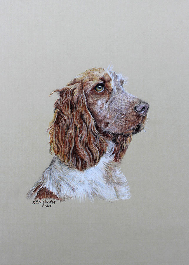 Spaniel 2 by Karen Loughridge