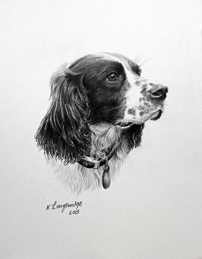 Springer by Karen Loughridge