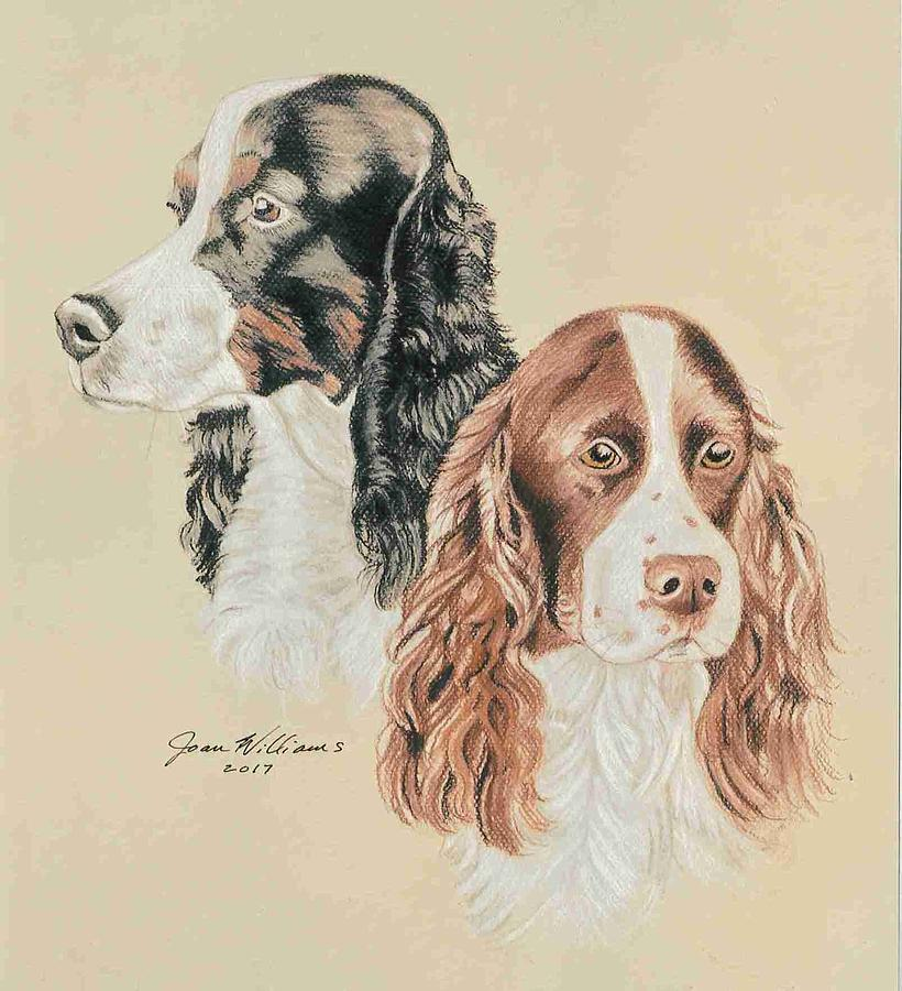Spaniel Pastel - Springer Spaniels by Joan Williams
