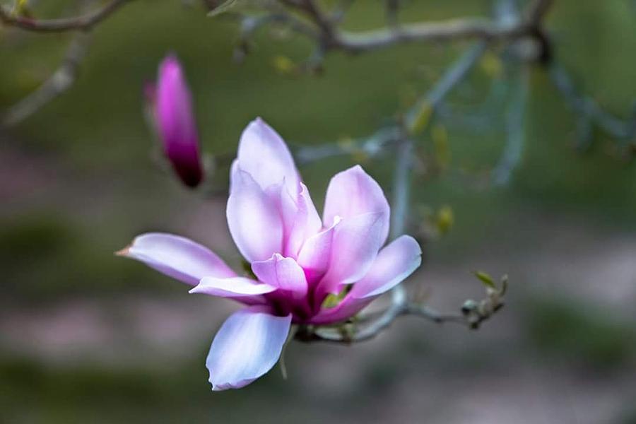 Springs Bloom Photograph by Denise Nehila