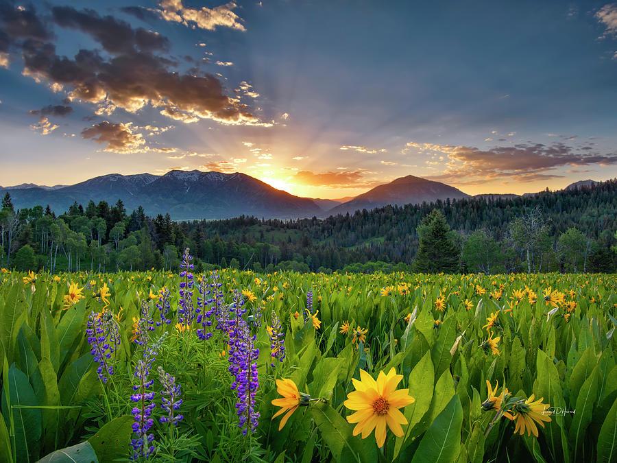 Calm Photograph - Springs Delight by Leland D Howard