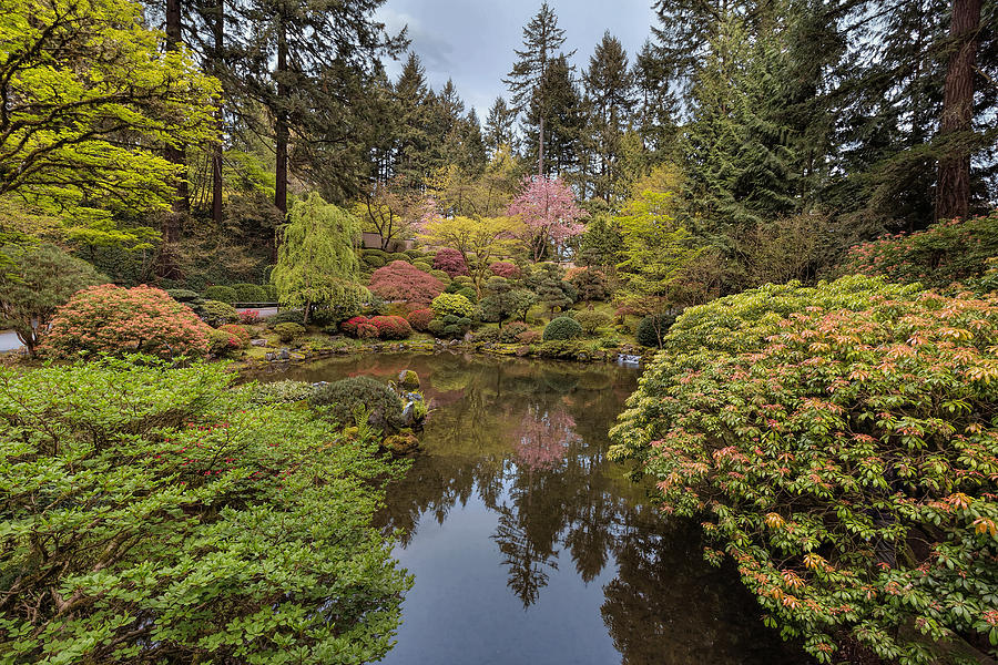 Pond Photograph - Springtime At Portland Japanese Garden by David Gn