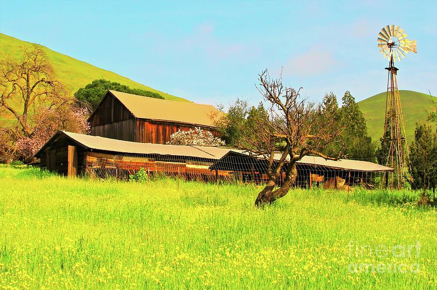 Farm Photograph - Springtime Barn San Francisco Bay by Gus McCrea