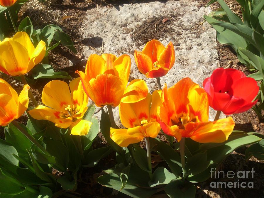 Flowers Photograph - Springtime Flowers by Rachel Maynard