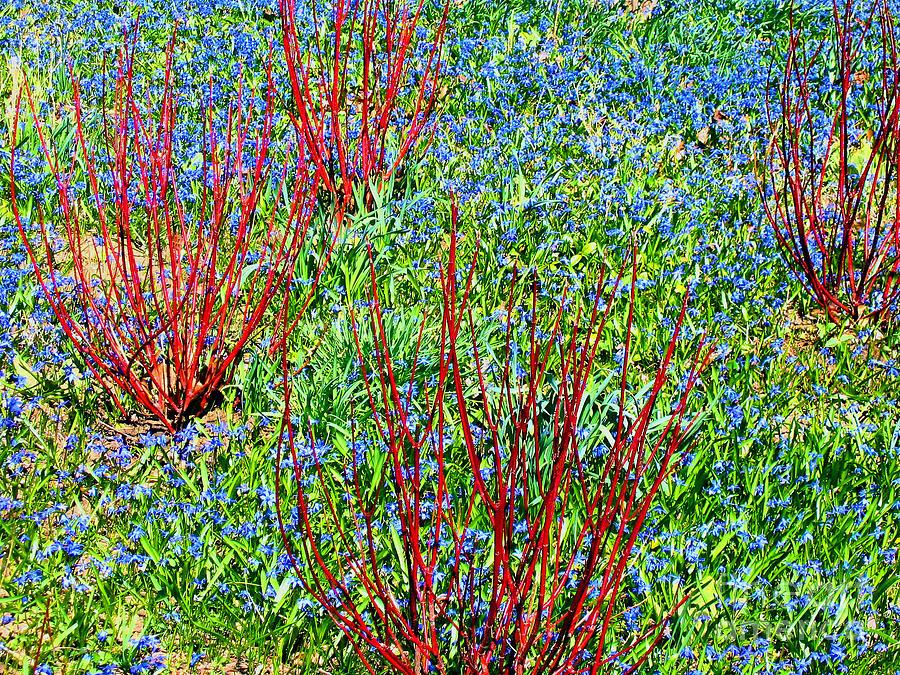 Spring Photograph - Springtime Impression by Ann Horn
