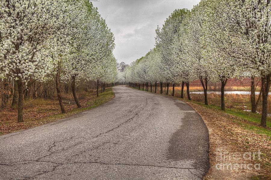 2011 Photograph - Springtime In Missouri by Larry Braun