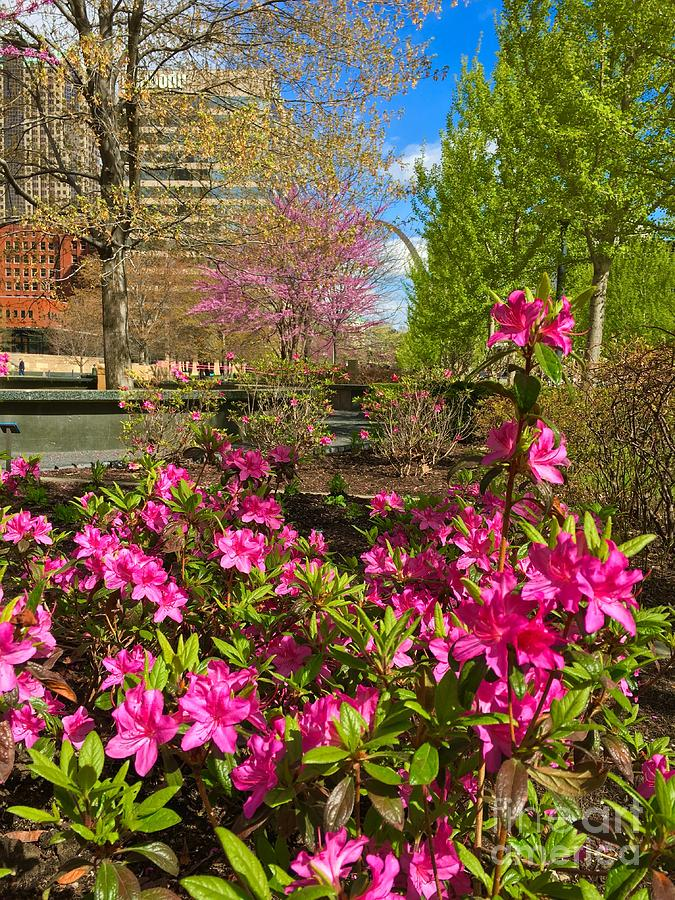 Springtime in the city at CityGarden  by Debbie Fenelon