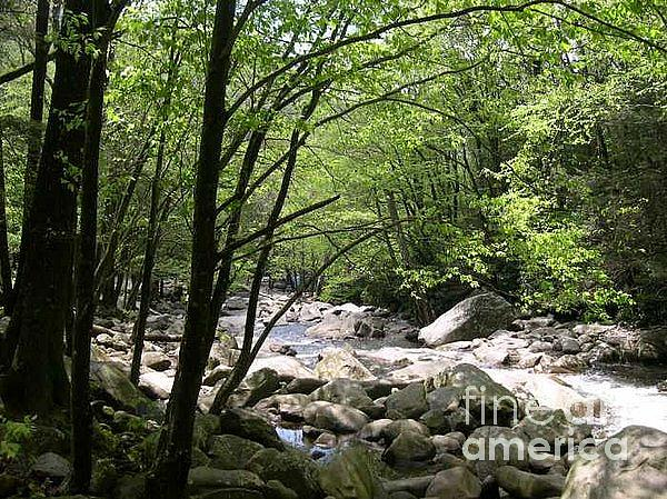 Nature Photograph - Springtime In The Smoky Mountains by Barb Montanye Meseroll