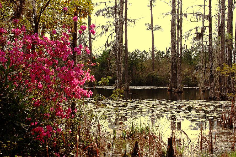 Springtime Photograph - Springtime In The Swamp by Susanne Van Hulst