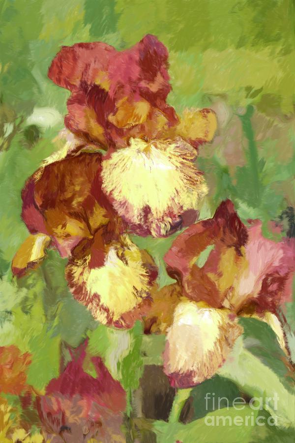 Iris Digital Art - Springtime Iris by Susan  Lipschutz