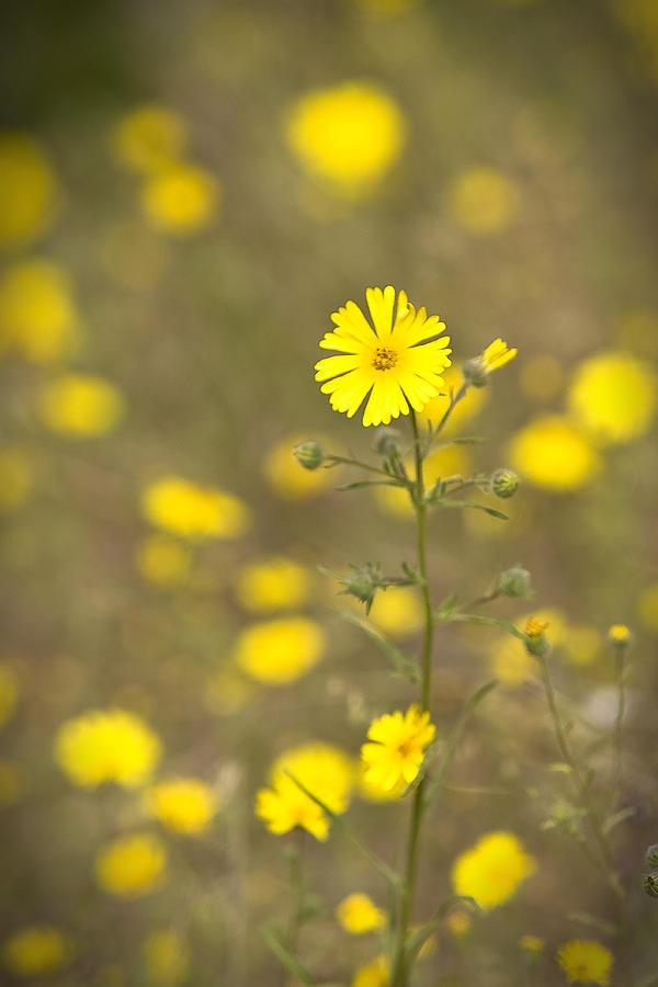 Flowers Photograph - Springtime by Jim Dohms