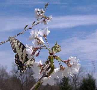 Butterfly Photograph - Springtime Monarch by Chris Jones