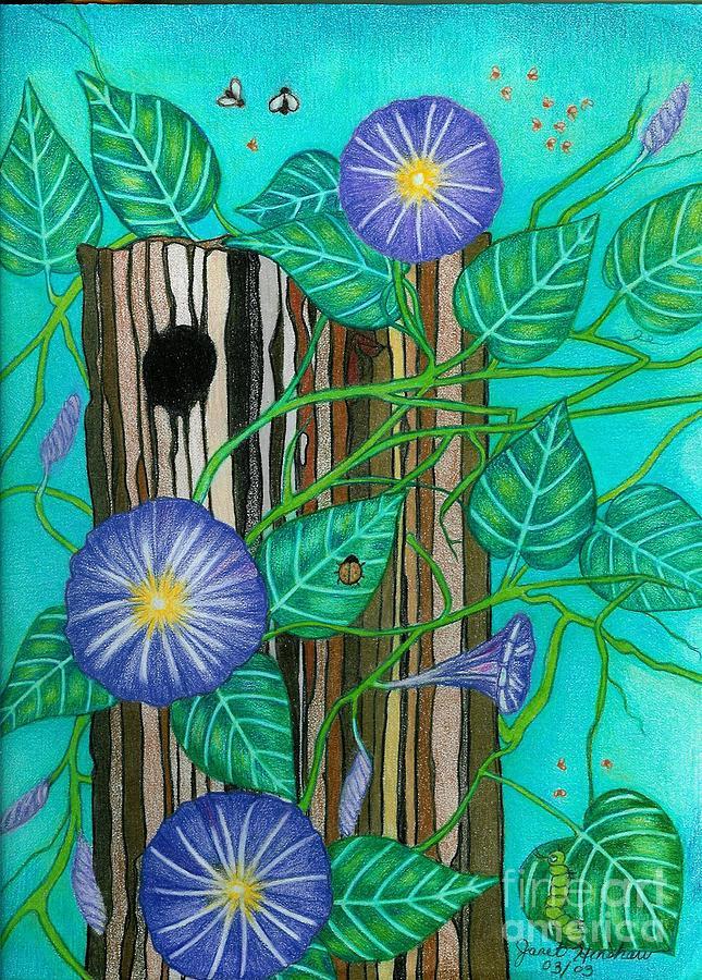 Nature Drawing - Springtime Purple Morning Glories by Janet Hinshaw