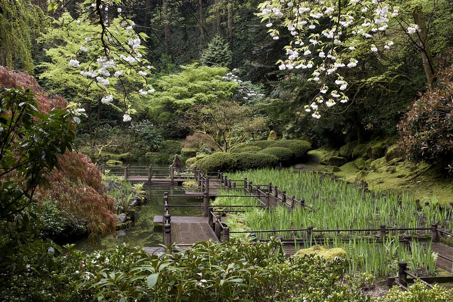 Pnw Photograph - Springtime Walkway by Wes and Dotty Weber
