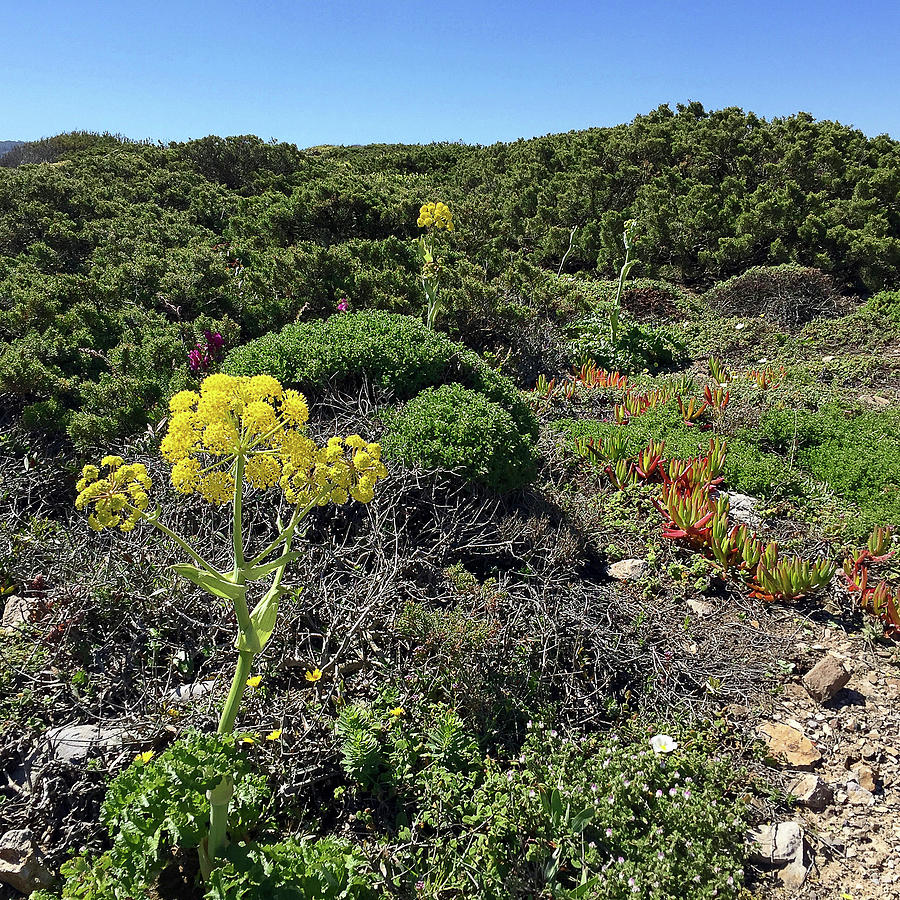 Beach Photograph - Springtime Wildflowers Along Coastal Hiking Trail - Portugal by Connie Sue White
