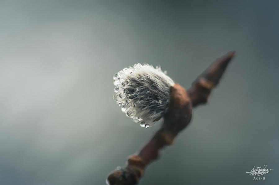 Spring Photograph - Sprouting by Adnan Bhatti