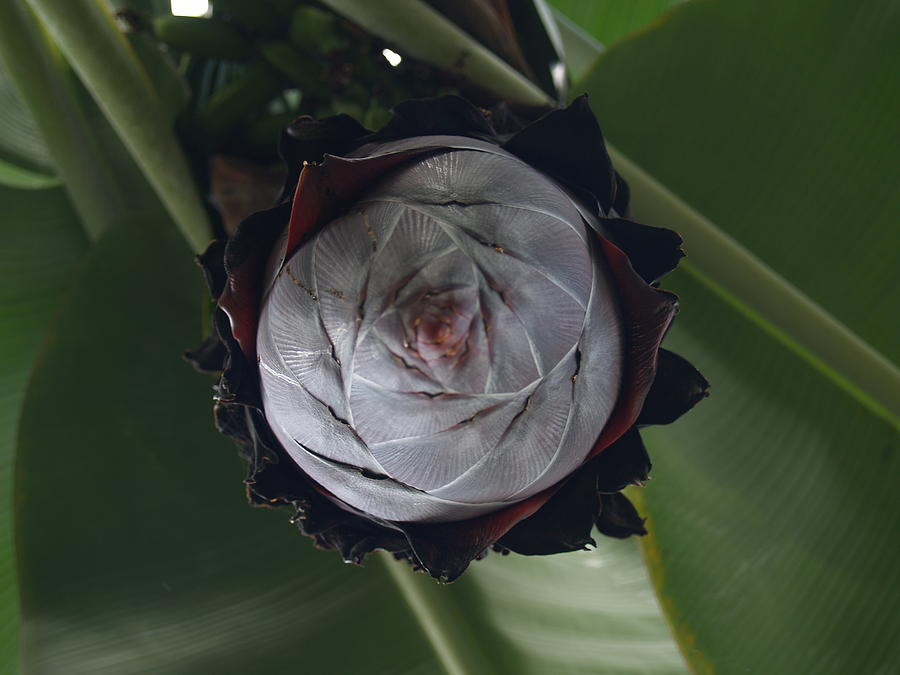 Flora Photograph - Sprouting by Jacob Stempky