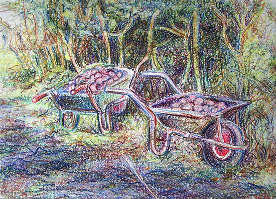 Spuds Drawing - Spuds In Barrows. by Anna Shipstone