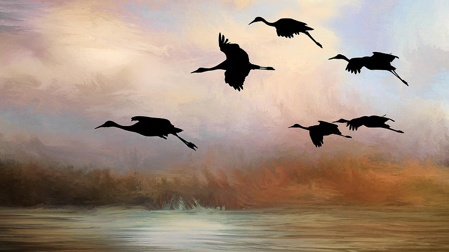 Squadron of Sandhill Cranes, Bosque del Apache, New Mexico by Flying Z Photography by Zayne Diamond