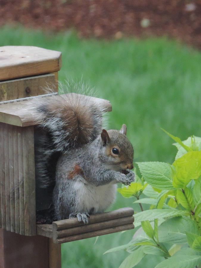 Squirrel Photograph - Squirrel 2 by Alora Peterson