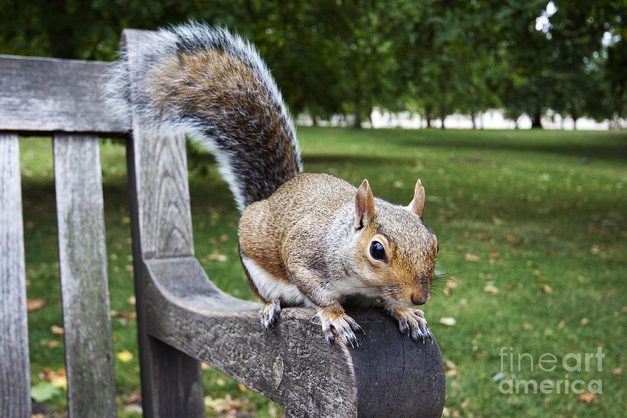 Squirrel Bench by Agusti Pardo Rossello