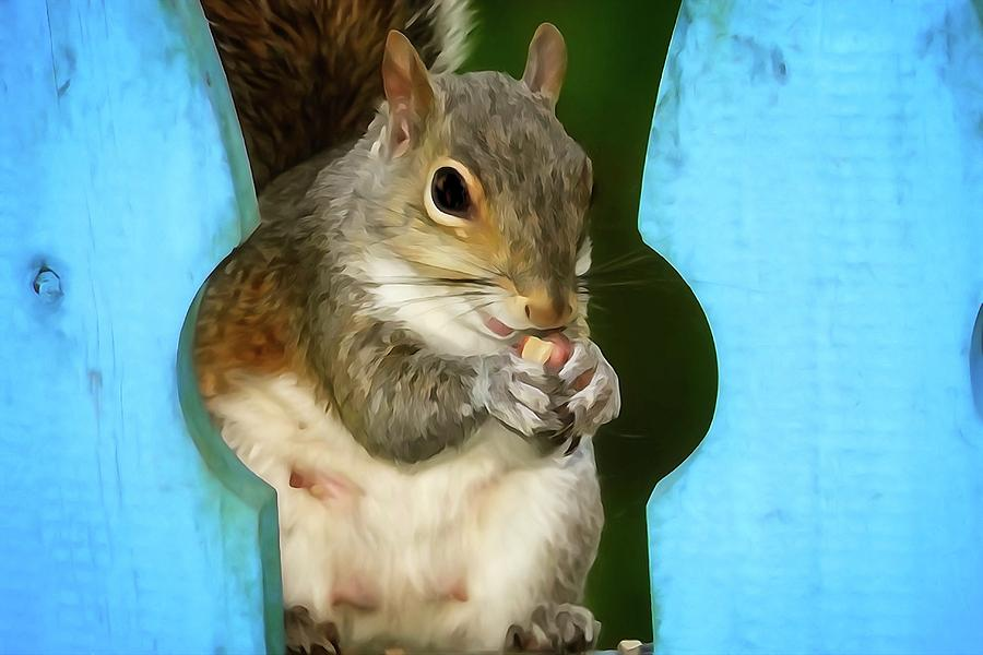 Squirrel Eating A Peanut Photograph