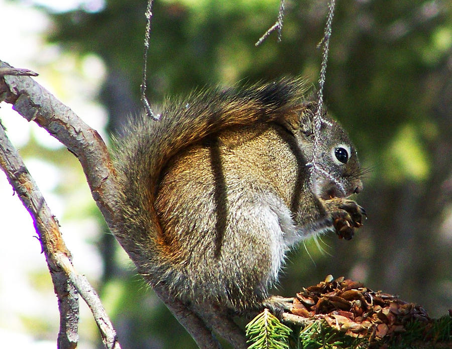Wildlife Photograph - Squirrel Enjoys A Great Meal by Teresia Moore