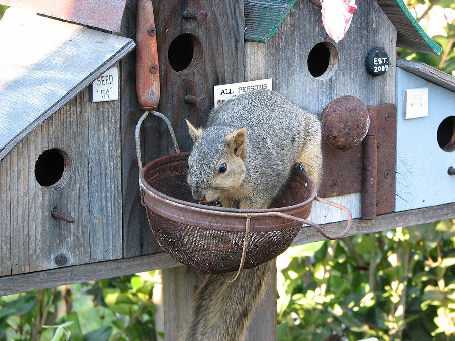 Squirrel Photograph - Squirrel Feeding by Patricia Barmatz