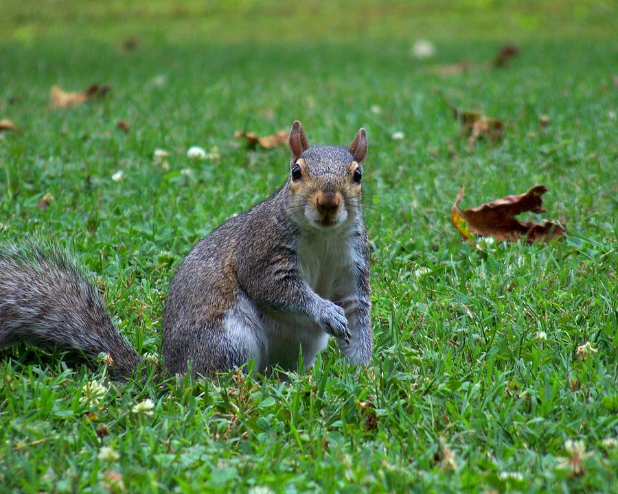 Squirrel Photograph - Squirrel Iv by Jai Johnson