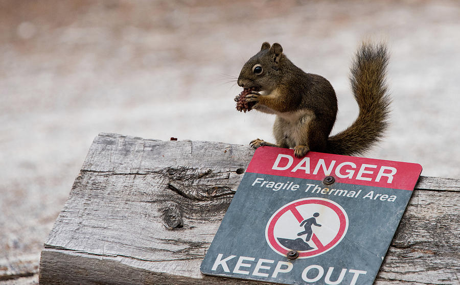 Squirrel Laughs at Danger by Jennifer Ancker