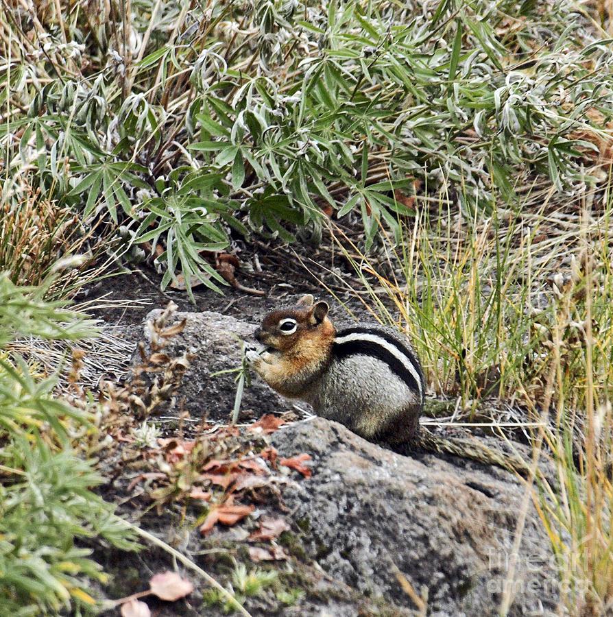 Squirrel Port209 Photograph