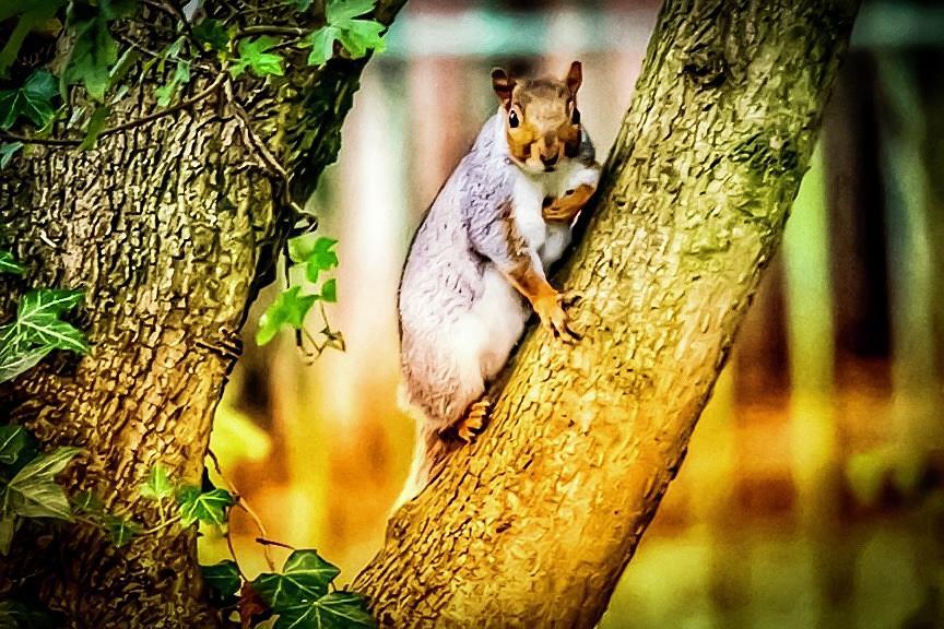 Squirrel pose  by Cliff Norton