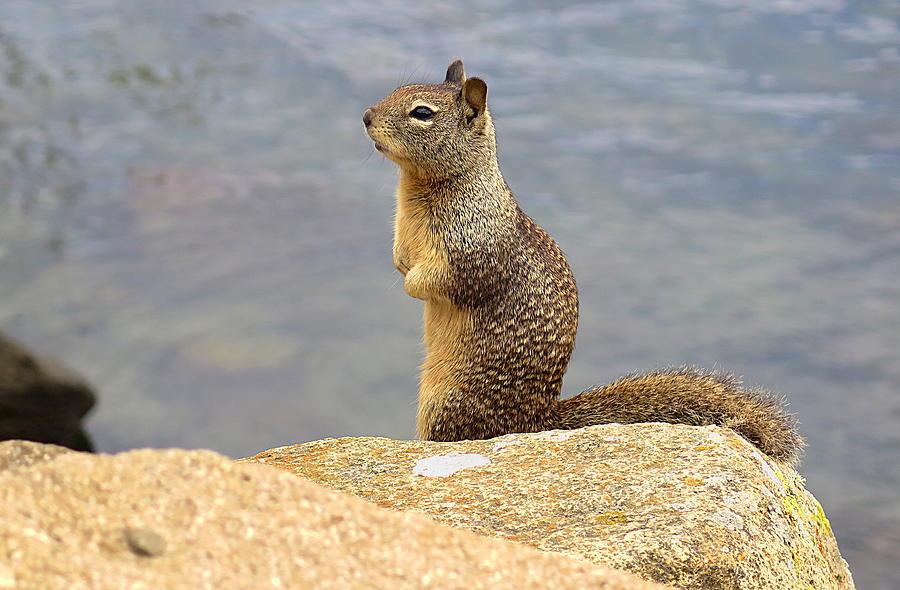 Squirrel by TJ Scar