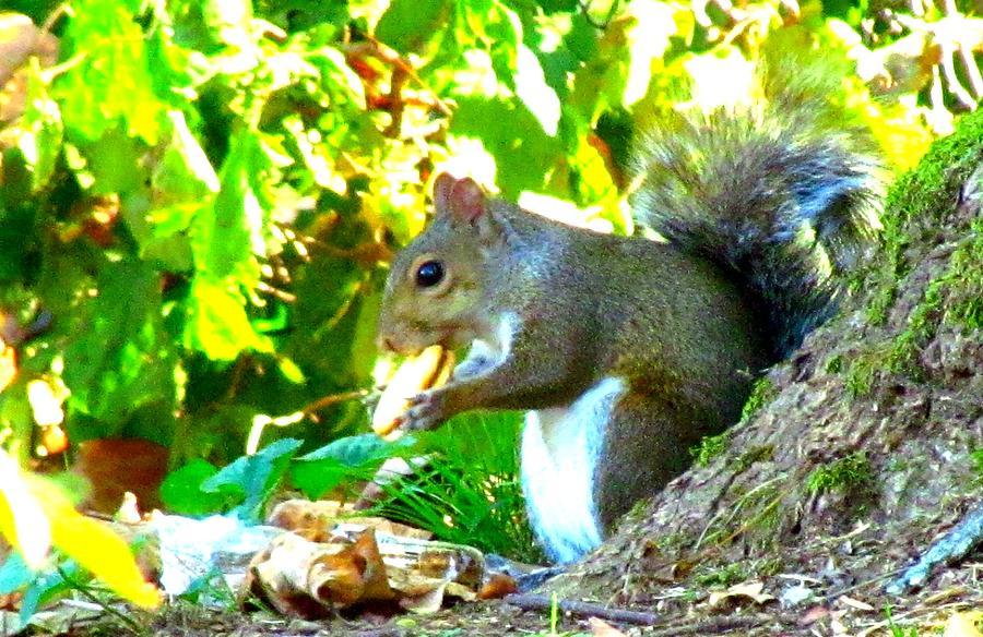 Wildlife Photograph - Squirrel1 by Shelley Wilson