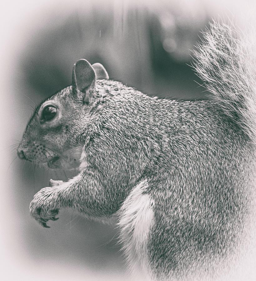 Squirrel Photograph - Squirrell by Martin Newman