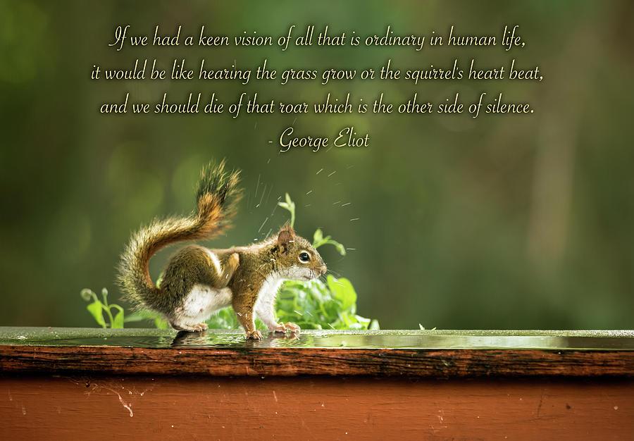 Squirrels Heart Beat-george Eliot Photograph