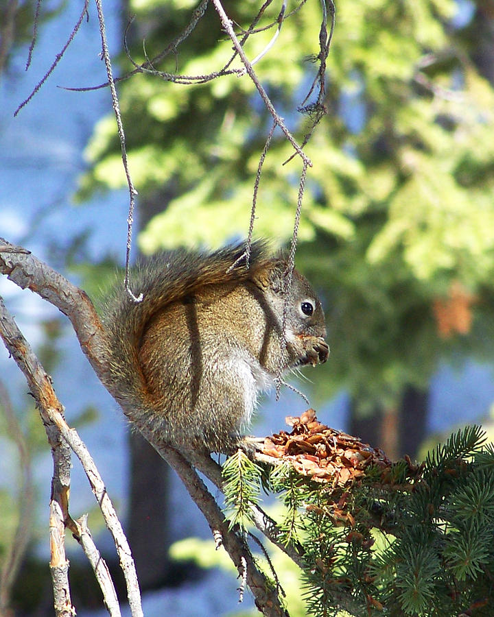 Squirrel Photograph - Squirrels Spring Meal by Teresia Moore
