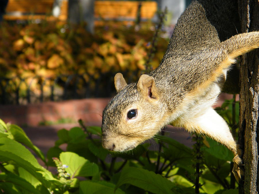 Squirrel Photograph - Squirrely by Stacy Frank