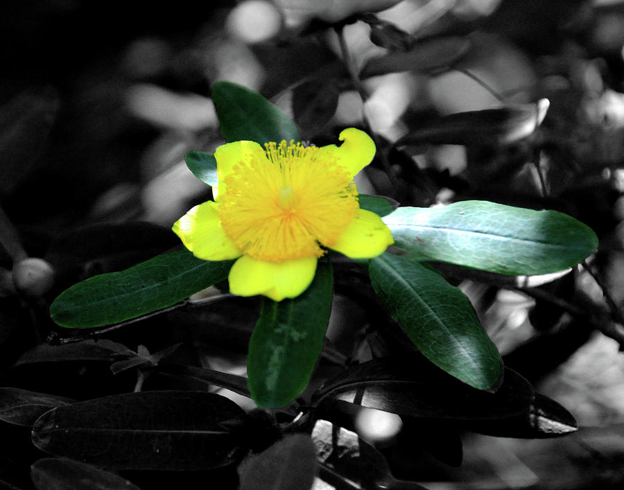 St John Wort by Angela Ford