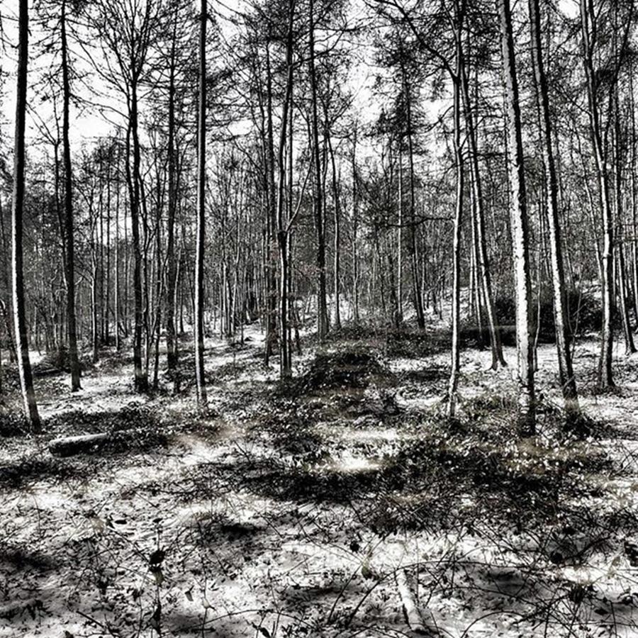 Nature Photograph - St Lawrences Wood, Hartshill Hayes by John Edwards