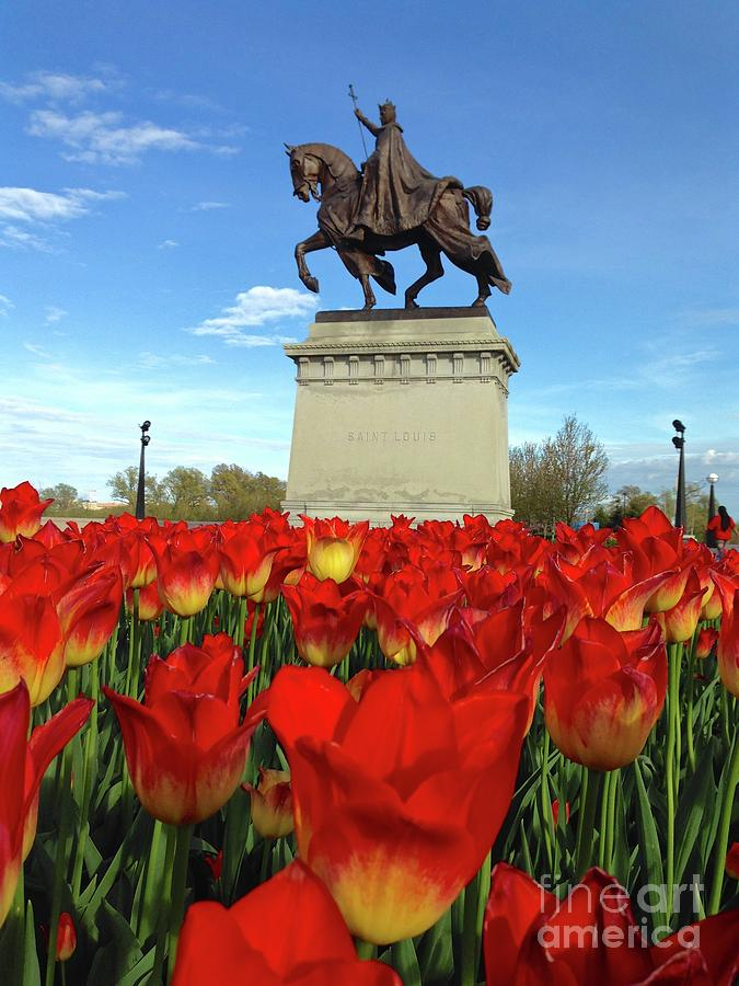 St Louis Riding Through the Red Tulips on Art Hill by Debbie Fenelon