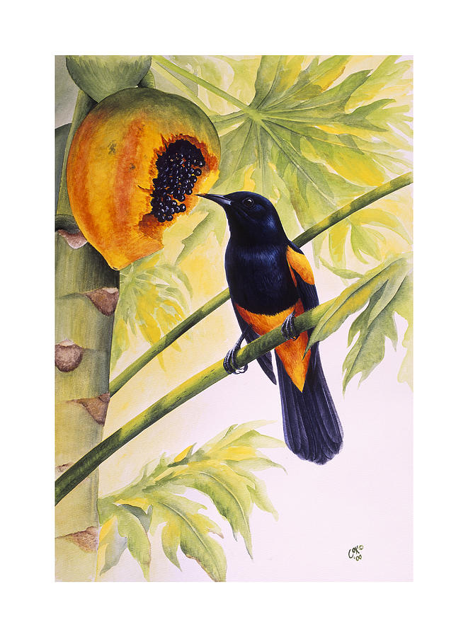 Chris Cox Painting - St. Lucia Oriole and papaya by Christopher Cox