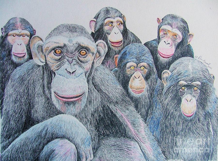 Orangutan Drawing - Staff Meeting by Dan Hausel