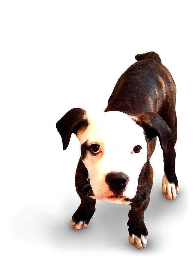 Staffordshire Bull Terrier Mixed Media - Staffordshire Bull Terrier Puppy by Michael Tompsett